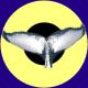 Logo i3s Contour