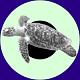 Logo i3sP